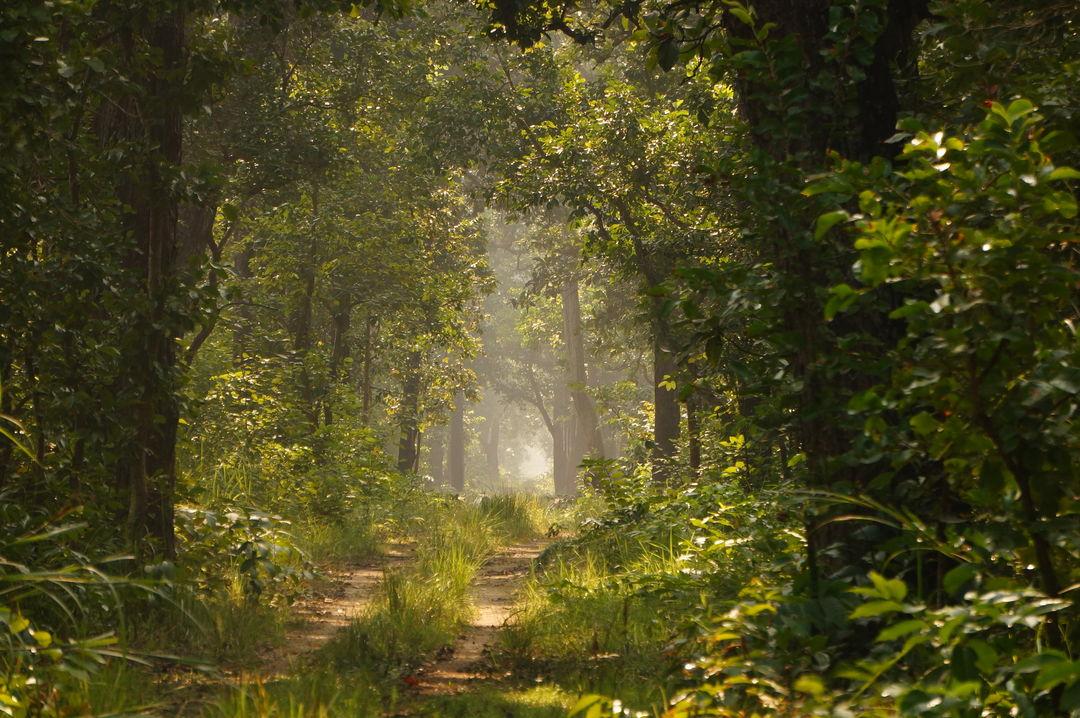 Suklaphanta National Park