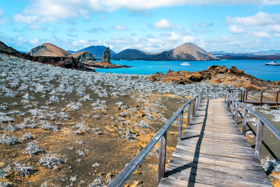 Galapagos Islands (Cruise)