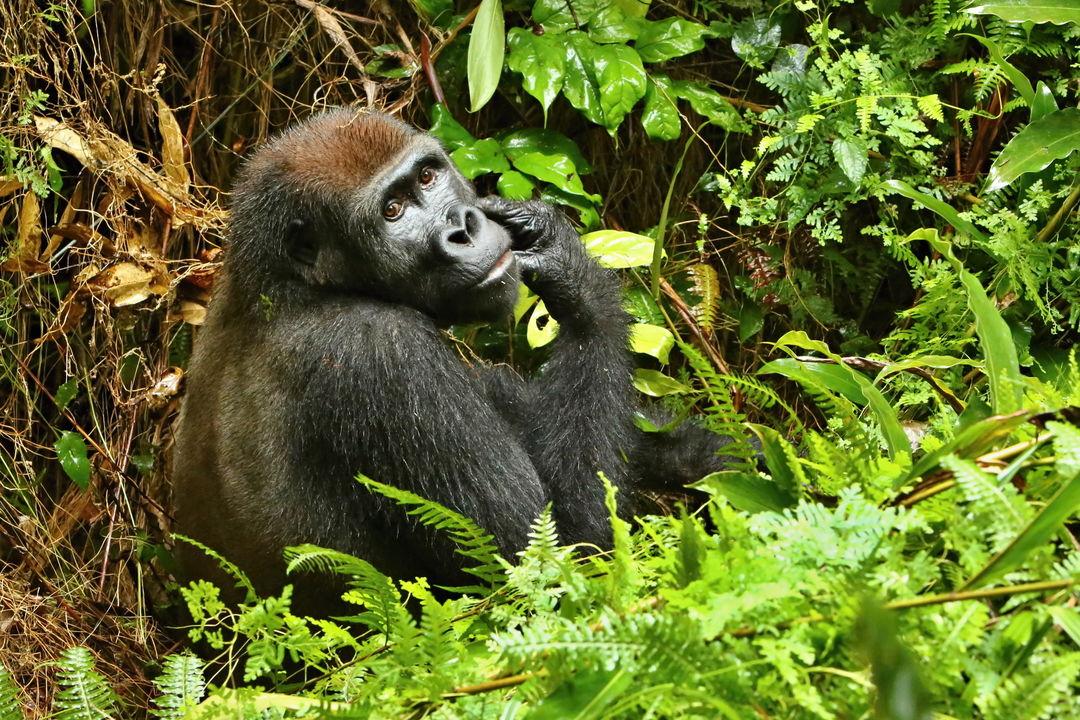 Congo (DRC)