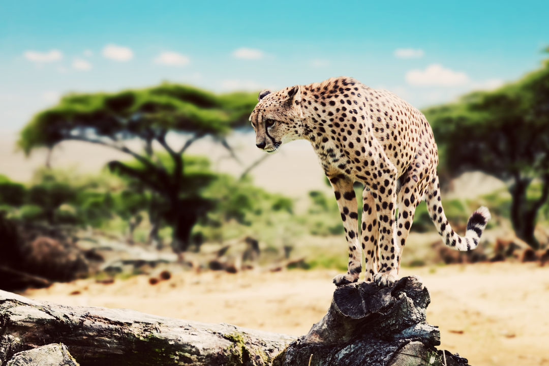 Serengeti Central