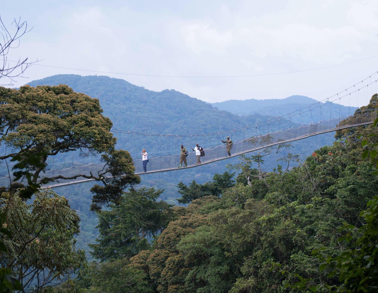 Jungle bridge in the DRC