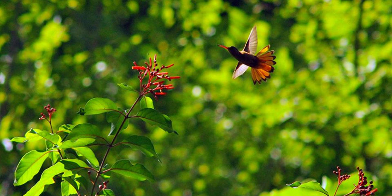 private nature reserve in Nicaragua