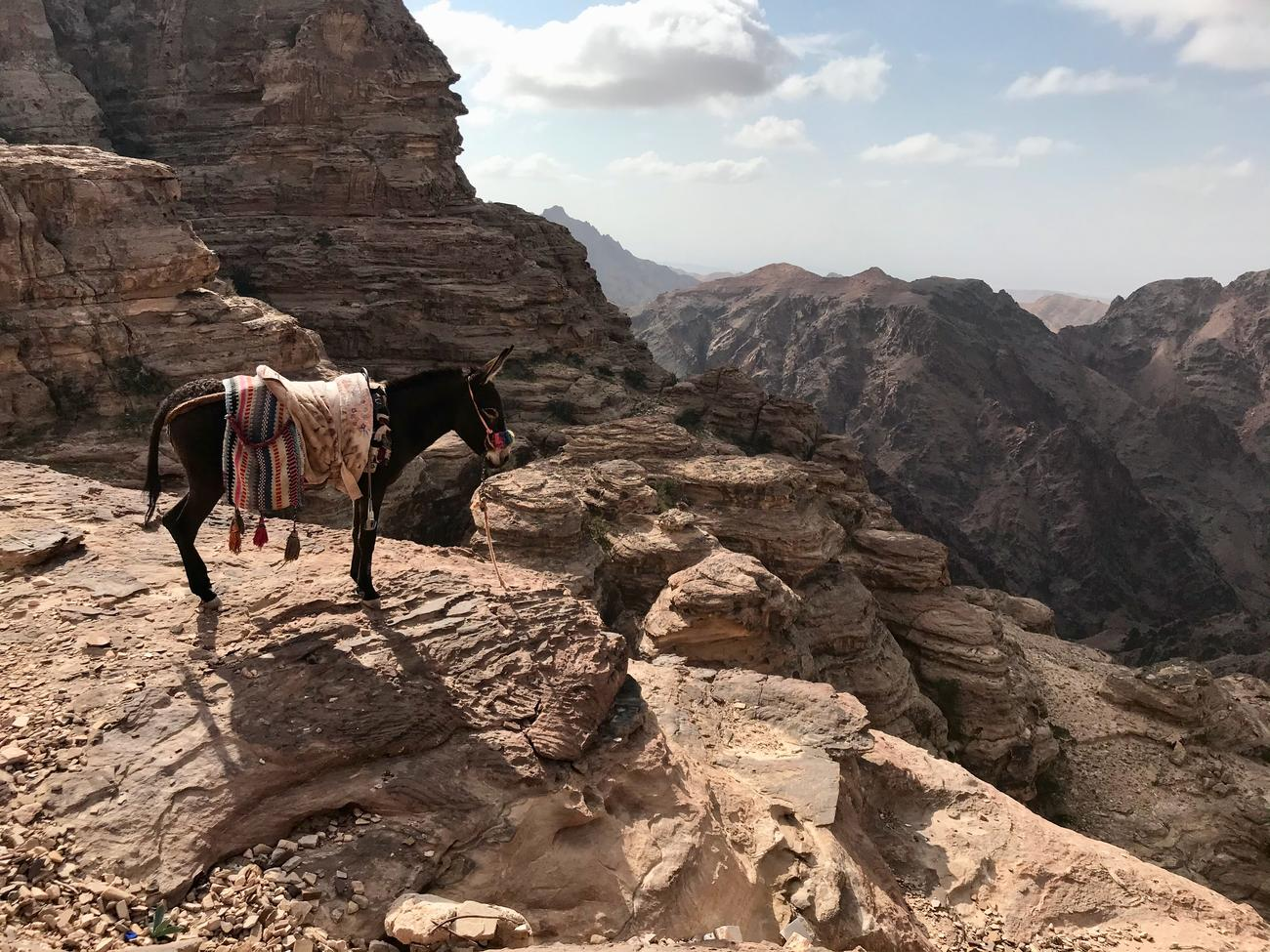 A guide to Petra