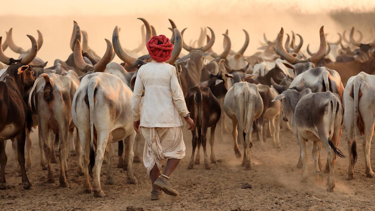 Rabari Herder in Kutch