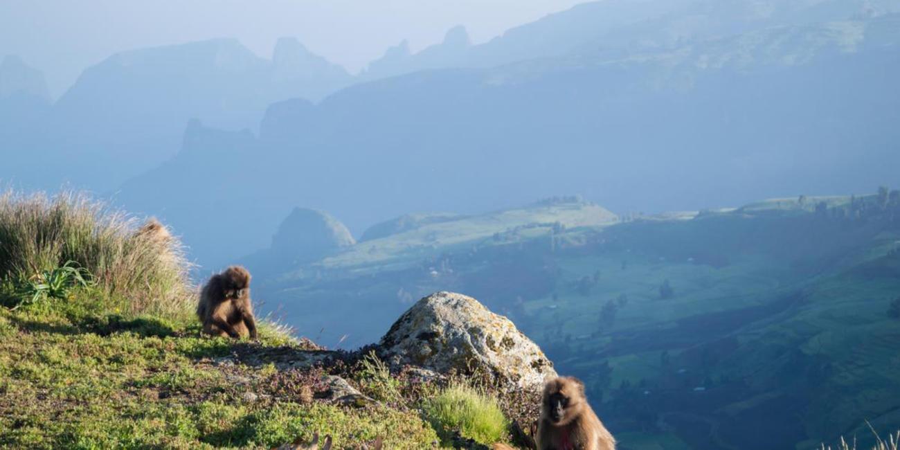 Simien Mountains Ethiopia