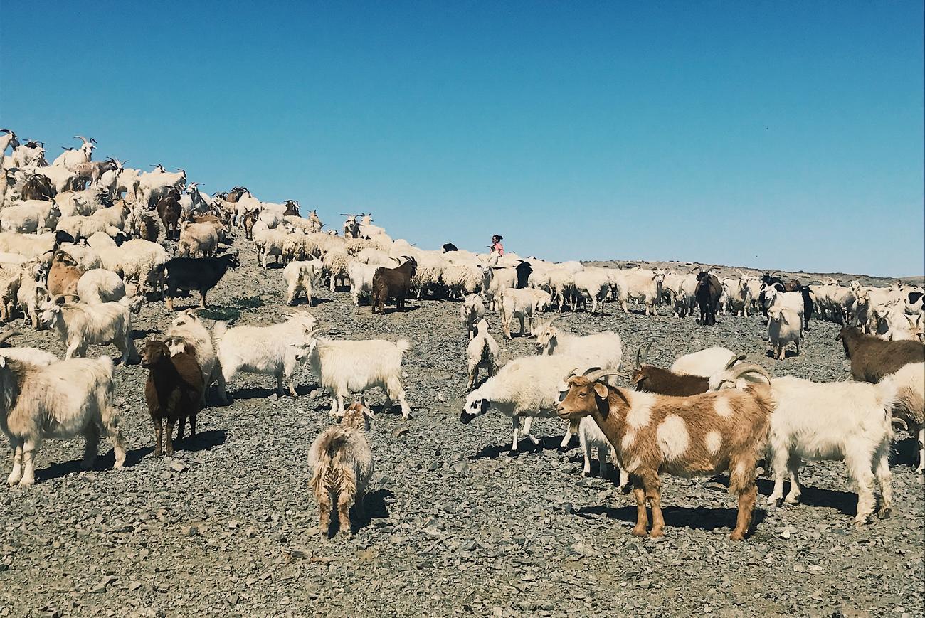 mongolia holidays