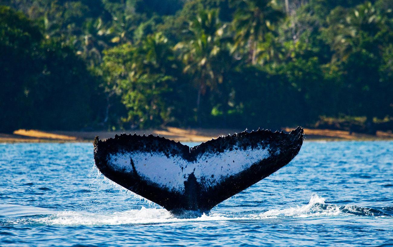 Spot Humpback Whales in June