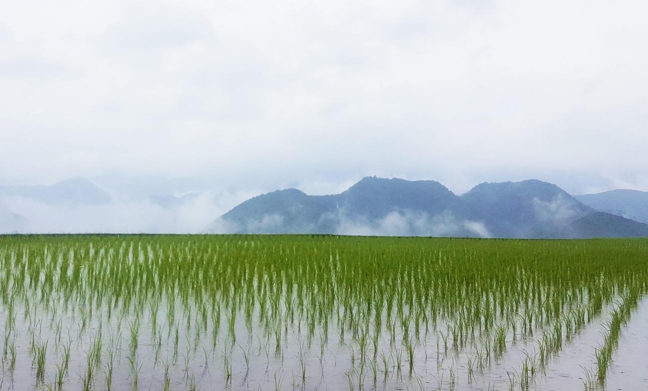 Paddy fields on Kumano Kodo, Japan