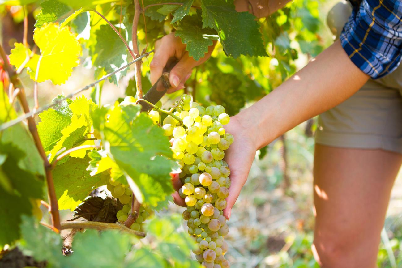 Get a taste for Georgian Wine