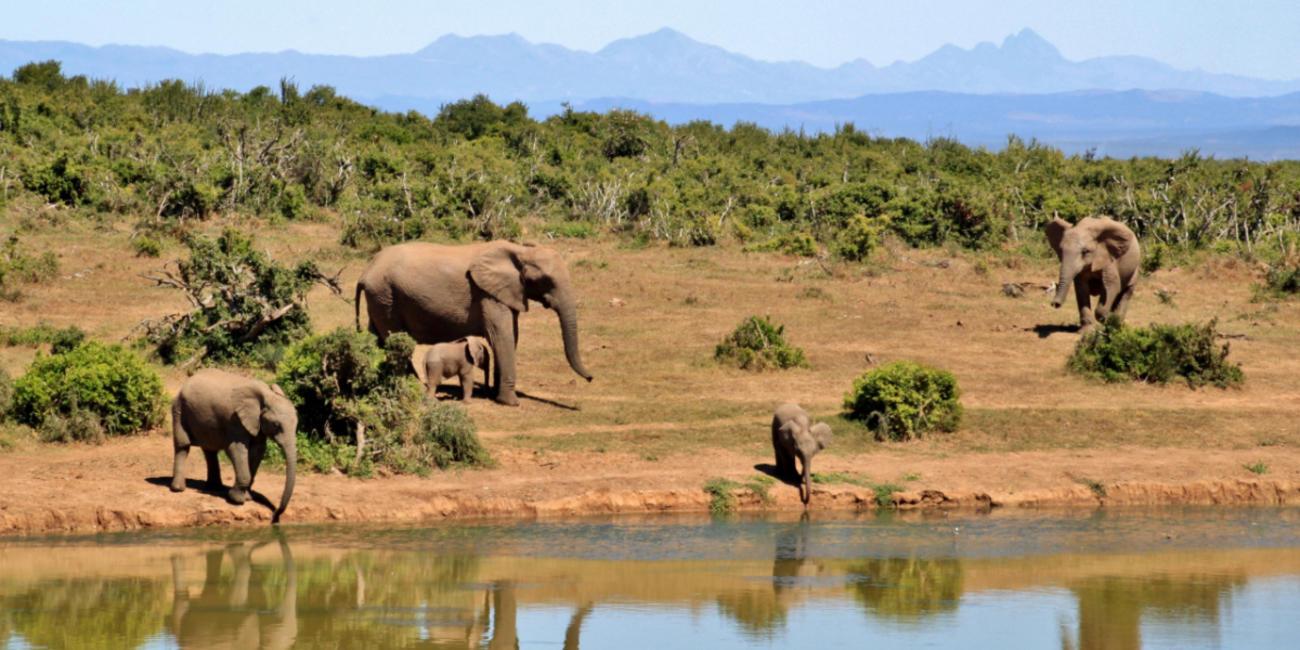 wild animals in ethiopia africa
