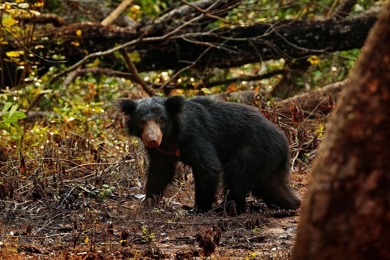See the wildlife in Wilpattu National ark