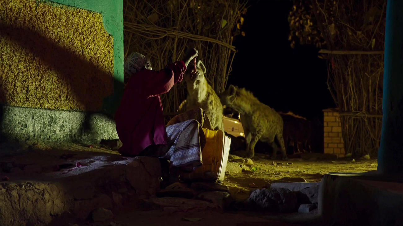See Harar's Hyena Man in action