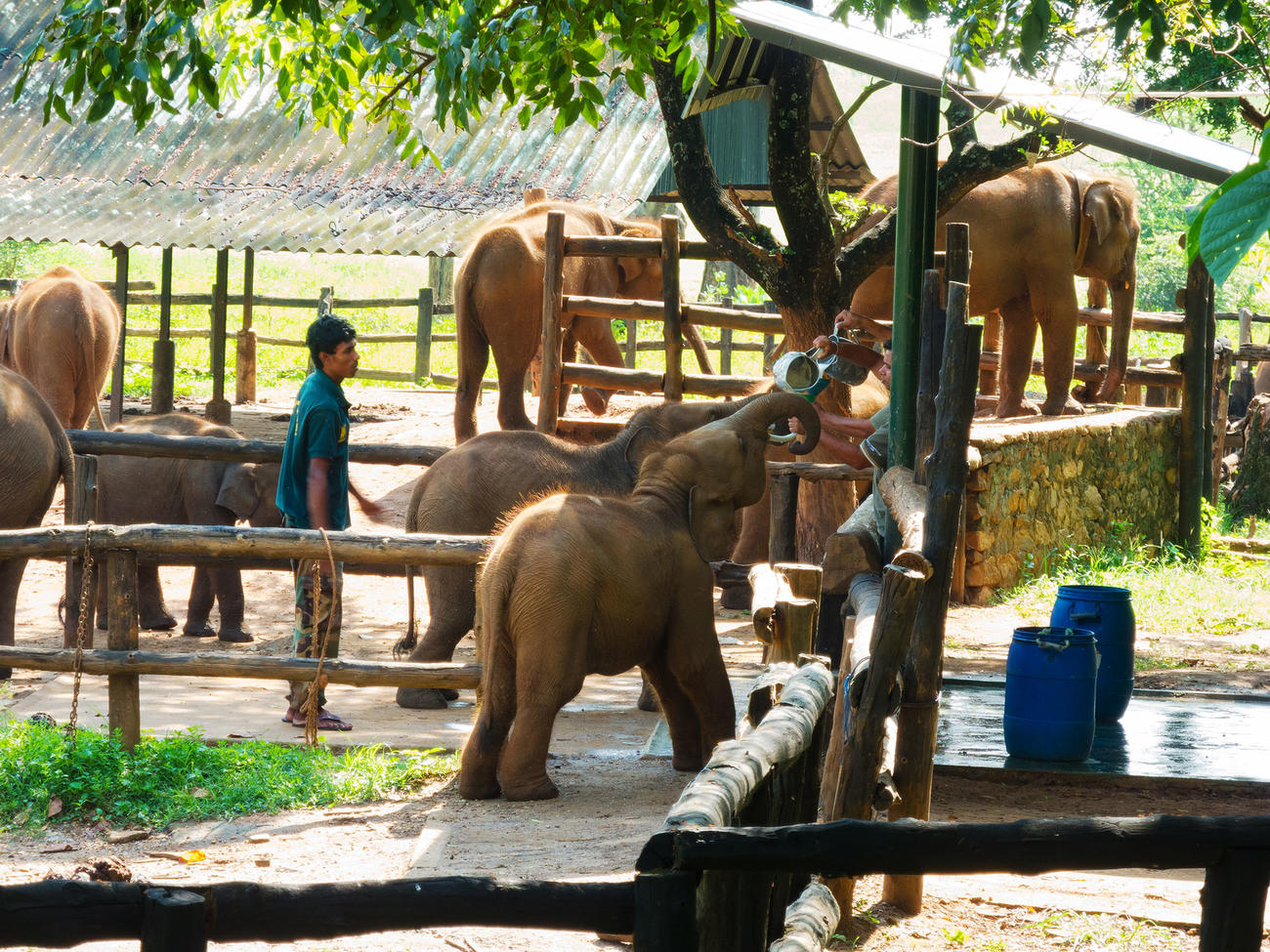 Visit the Elephant Transit Home