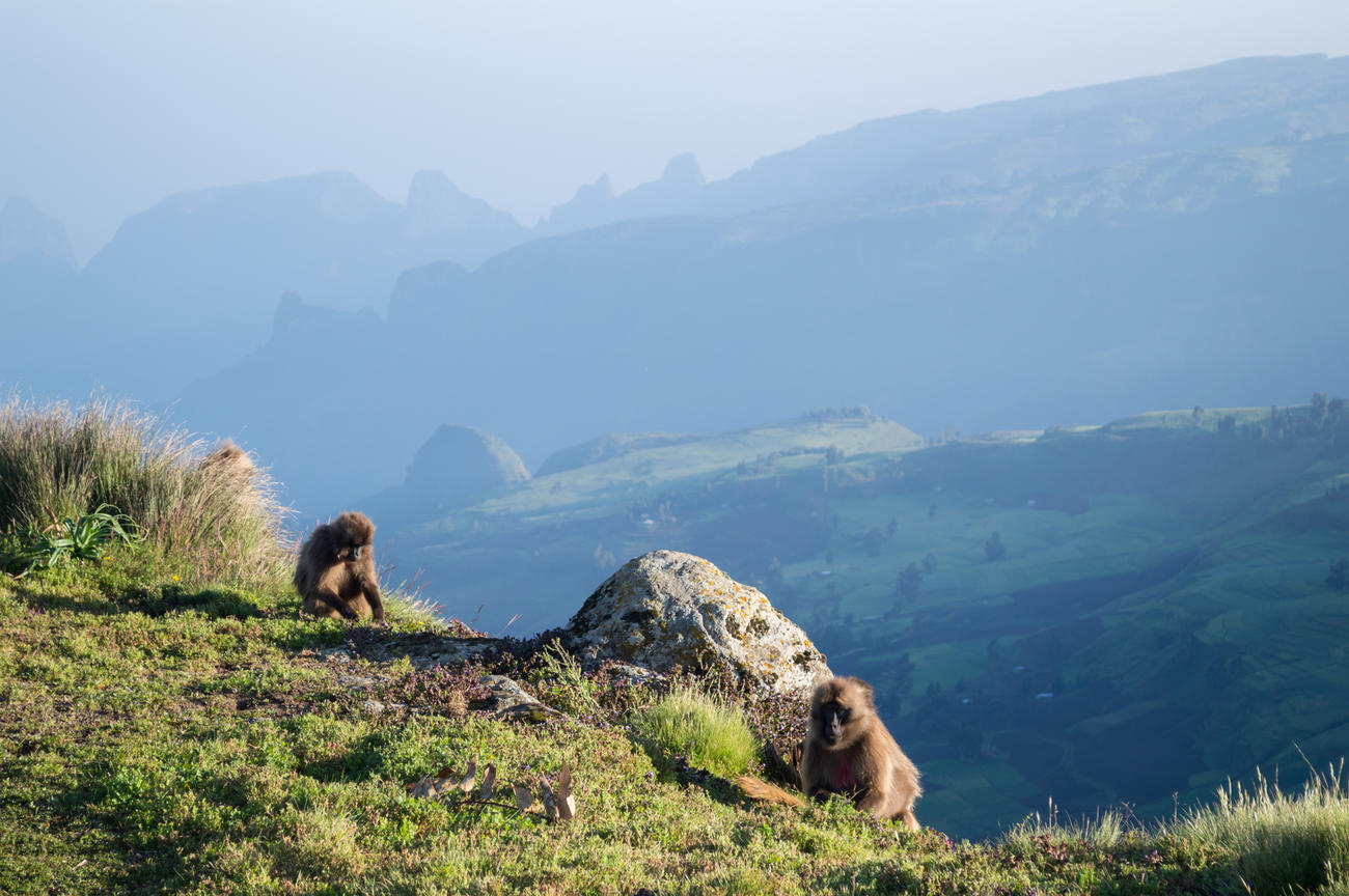 why visit the simien mountains