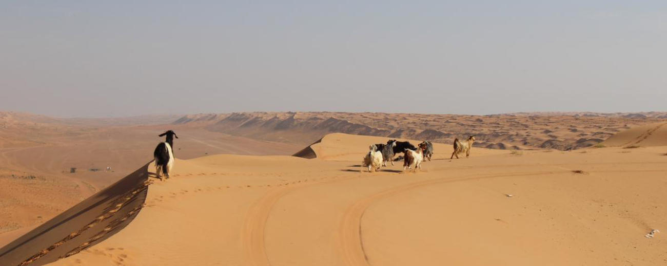 Oman Empty Quarter Tours