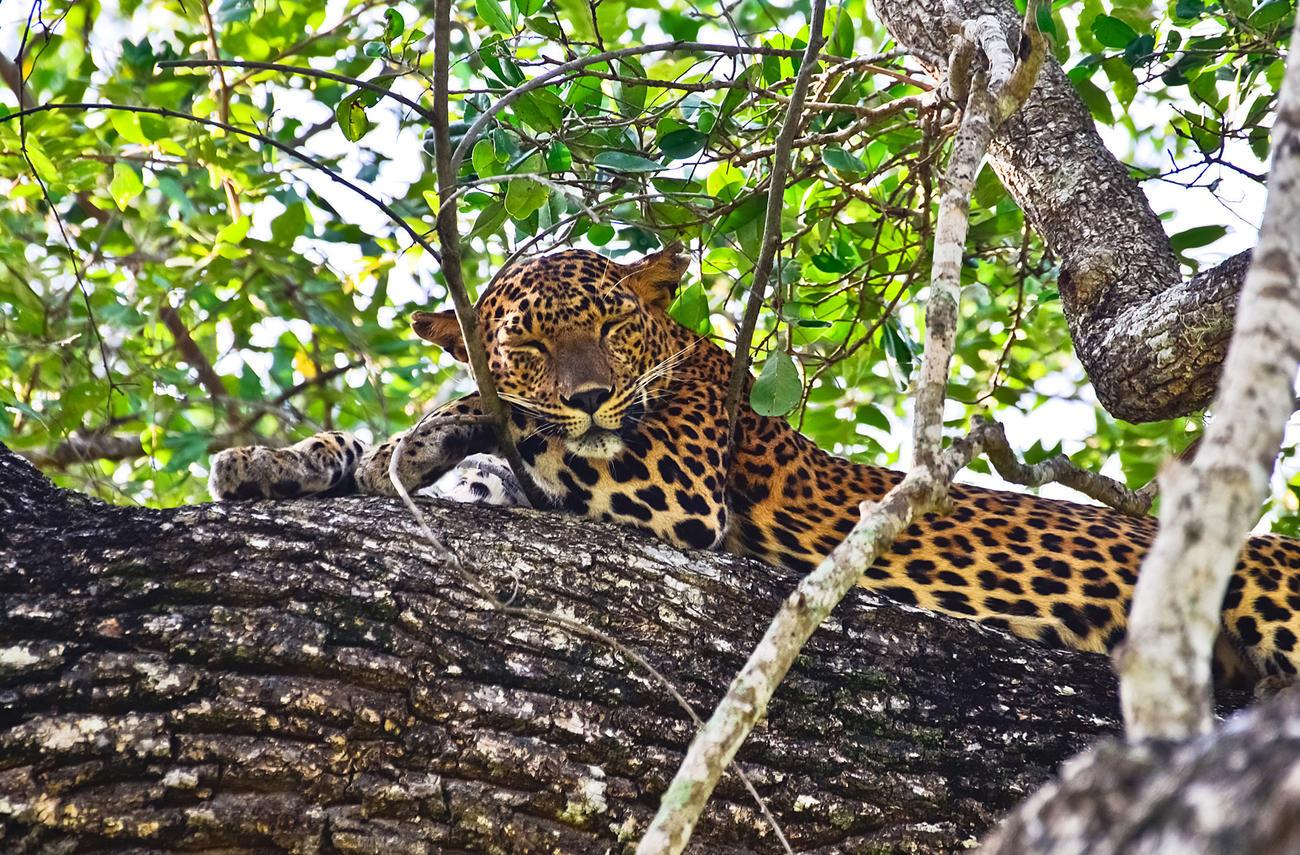 See wildlife at Wilpattu Park