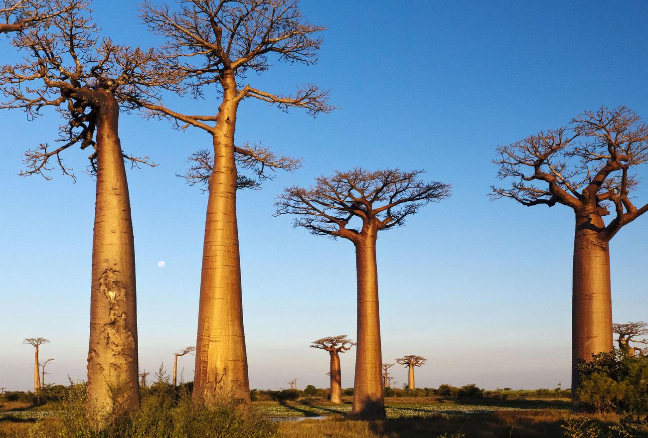 Summer in Madagascar