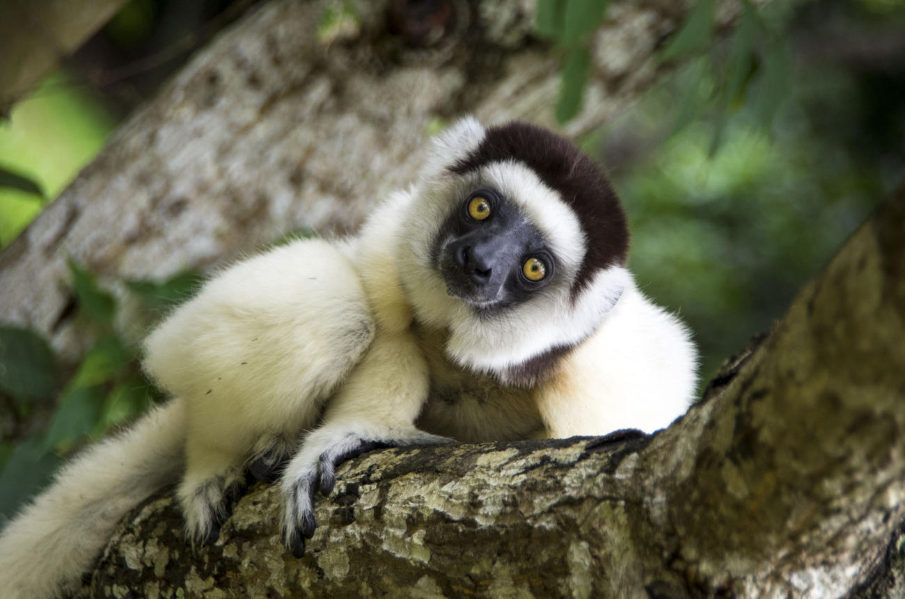 Madagascar Wildlife Tours
