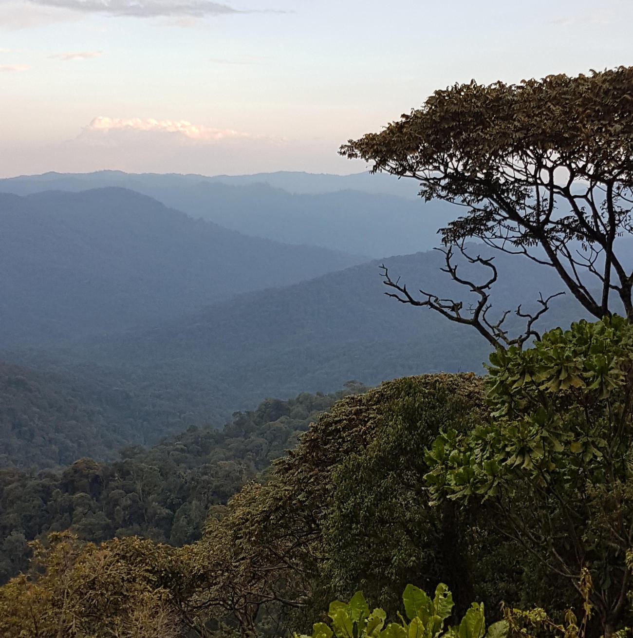 Rwanda jungle