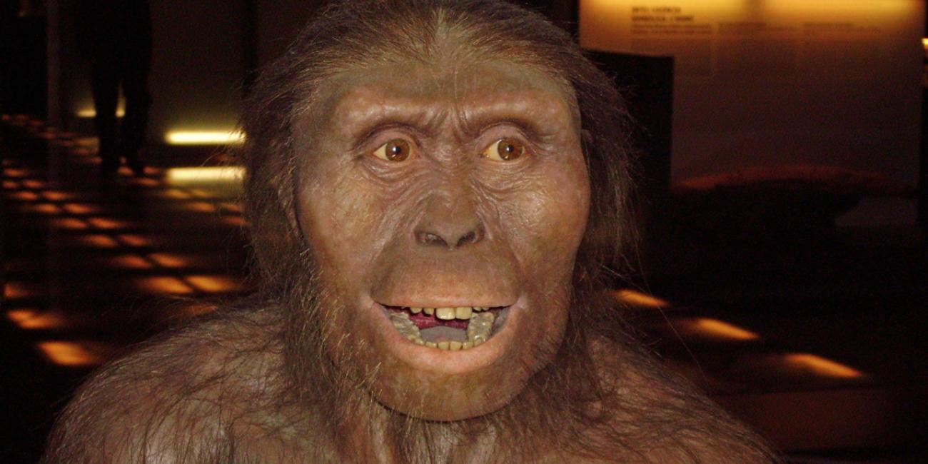 australopithecus hominid lucy of ethiopia