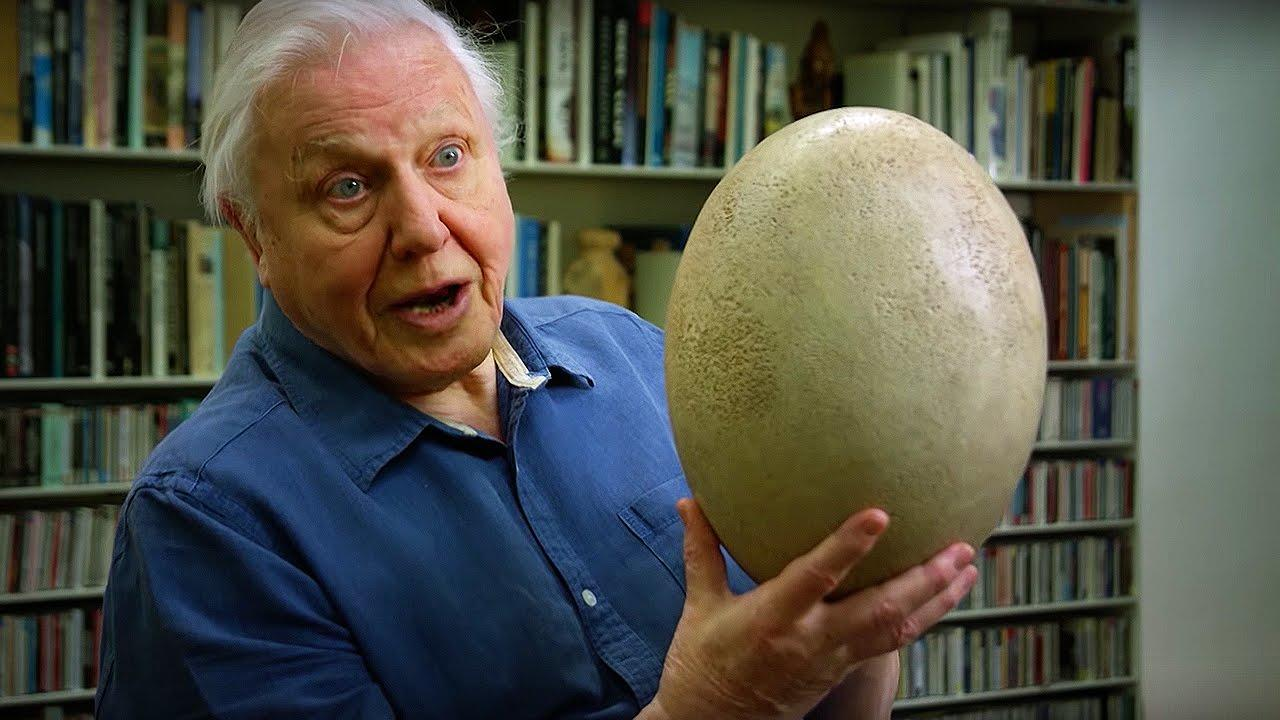 Giant Elephant Bird Egg | #Attenborough90 | BBC